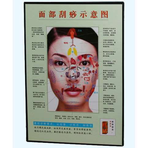 G-06A3 Acupuncture Face Chart