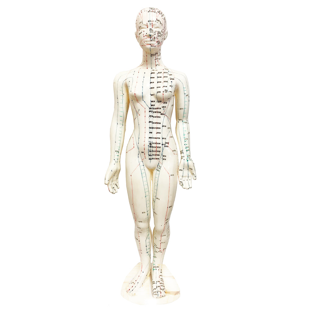 "Acupuncture Female Model  19"" (48cm)/ M-02 - Acubest"