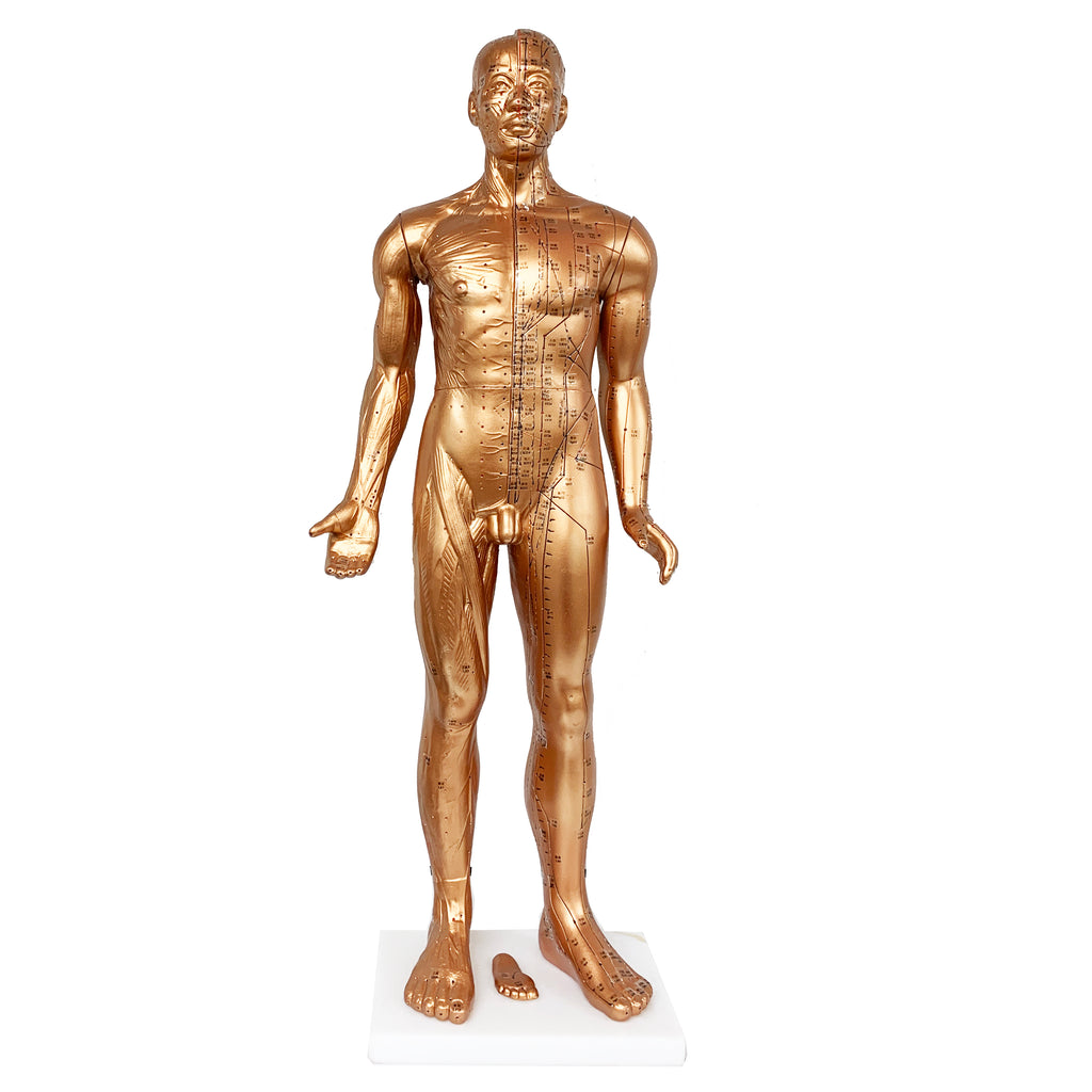 "Acupuncture Male Model 34"" (85cm)/ M-08A - Acubest"