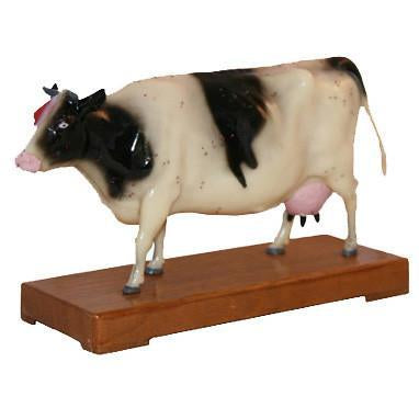 Acupuncture Model Of Cow / M-10