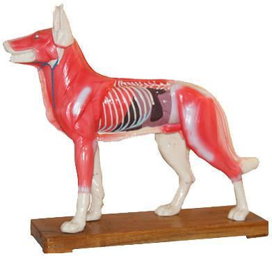 M-11 Acupuncture Model Of Dog