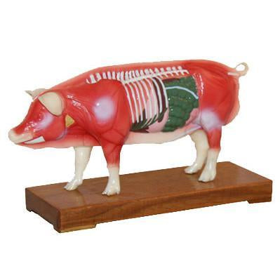 M-09 Acupuncture Moodel Of Pig