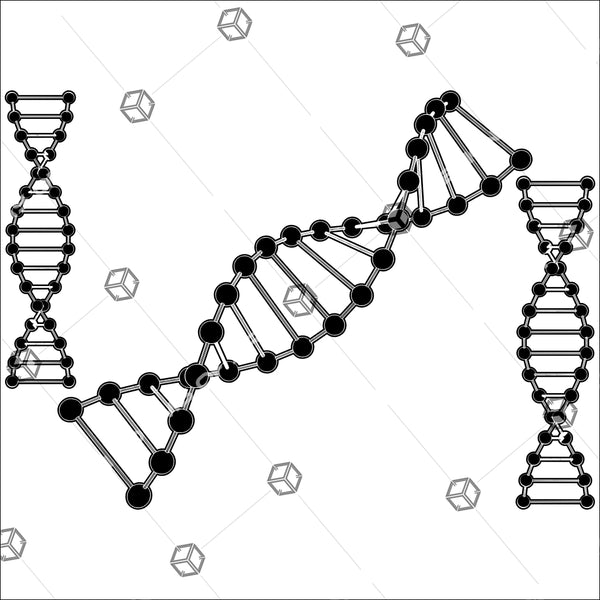 DNA String Isolated On White Background 01 - Vector - Design Forms Of Art