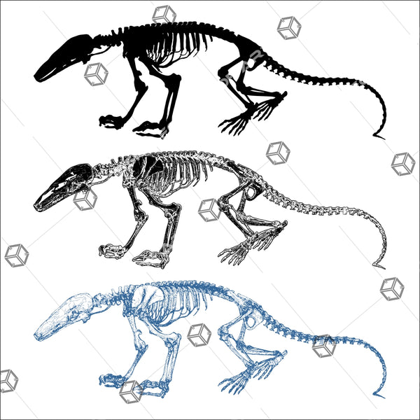 Dinosaur Skeleton 01 - Vector - Design Forms Of Art