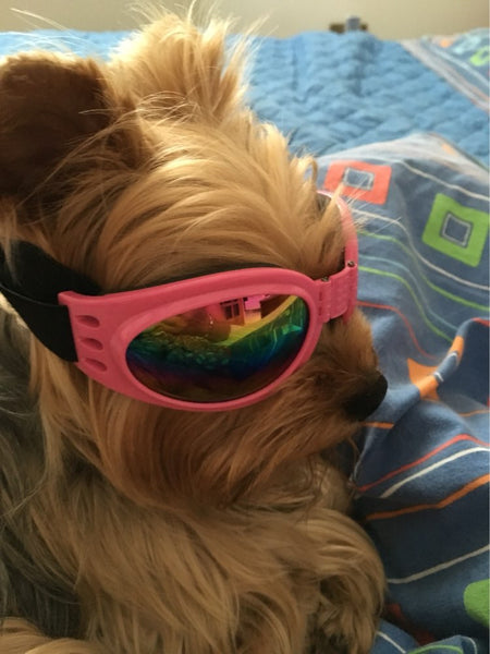FREE ITEM - Dog Cool Waterproof Sunglasses
