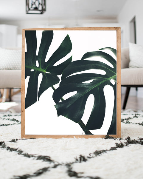Monstera Leaf- Color