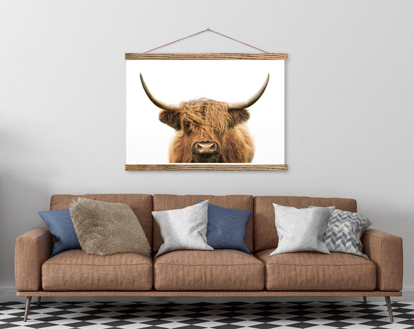 Highland Cow ( color)