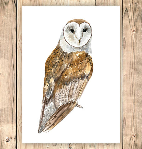 Owl art - Barn owl watercolor