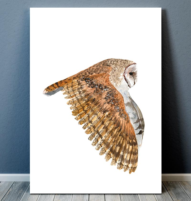Barn owl II - Bird art - Watercolor print