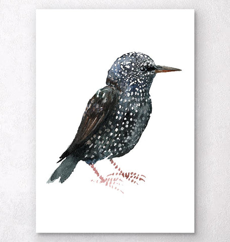 Starling - Watercolor bird art print