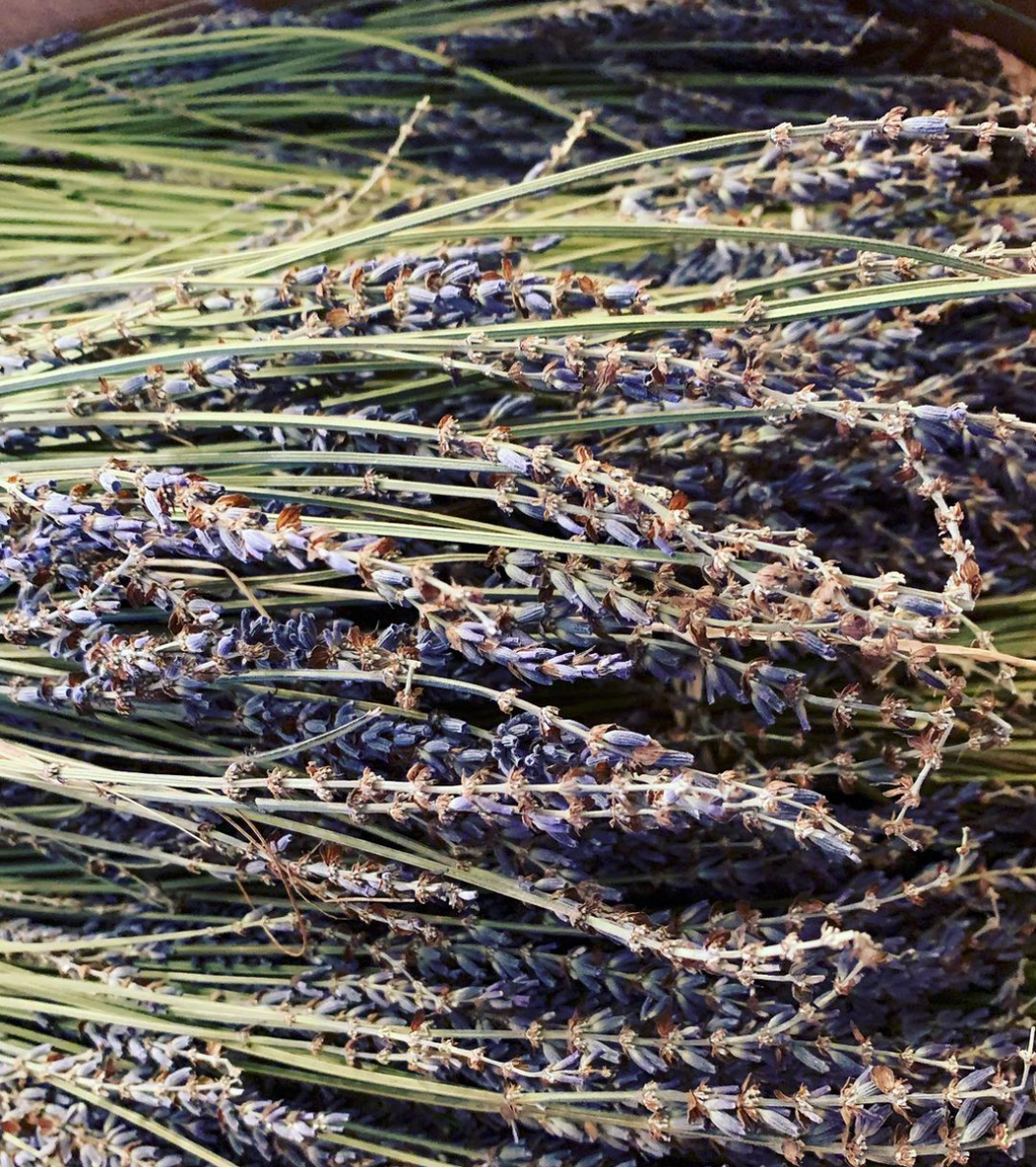 Nothing brings back the feeling of Provence then the scent of lavender. Our dried hidecote lavender bundles, grown here in the US can fill your home with the allure of Provence. Our certified organic oversized lavender bundles contain 100-200 stems approximately. They are dark in color, excellent in arrangements, beautiful for crafting.
