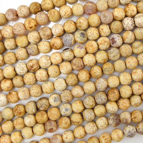 "8mm brown cream crazy lace agate round beads 15.5"" strand"