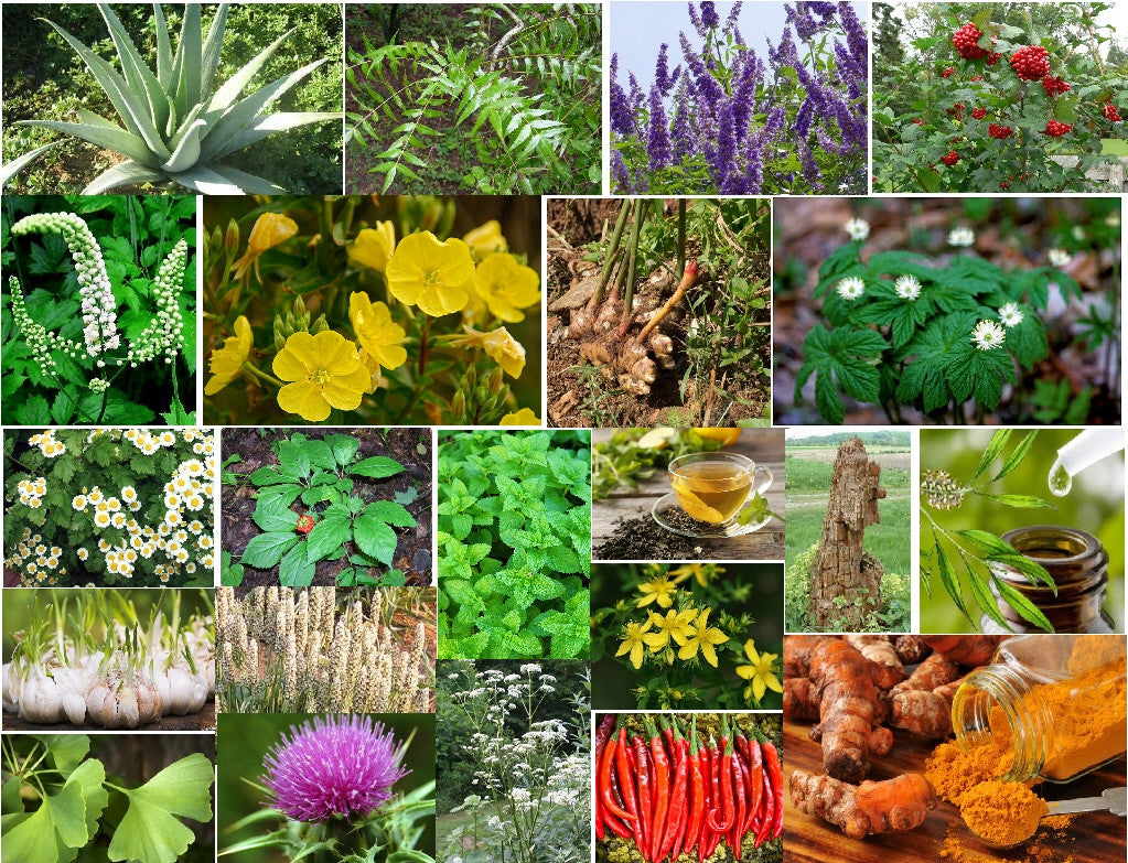 PROVEN HERBS TO HELP WITH COMMON HEALTH CONDITIONS