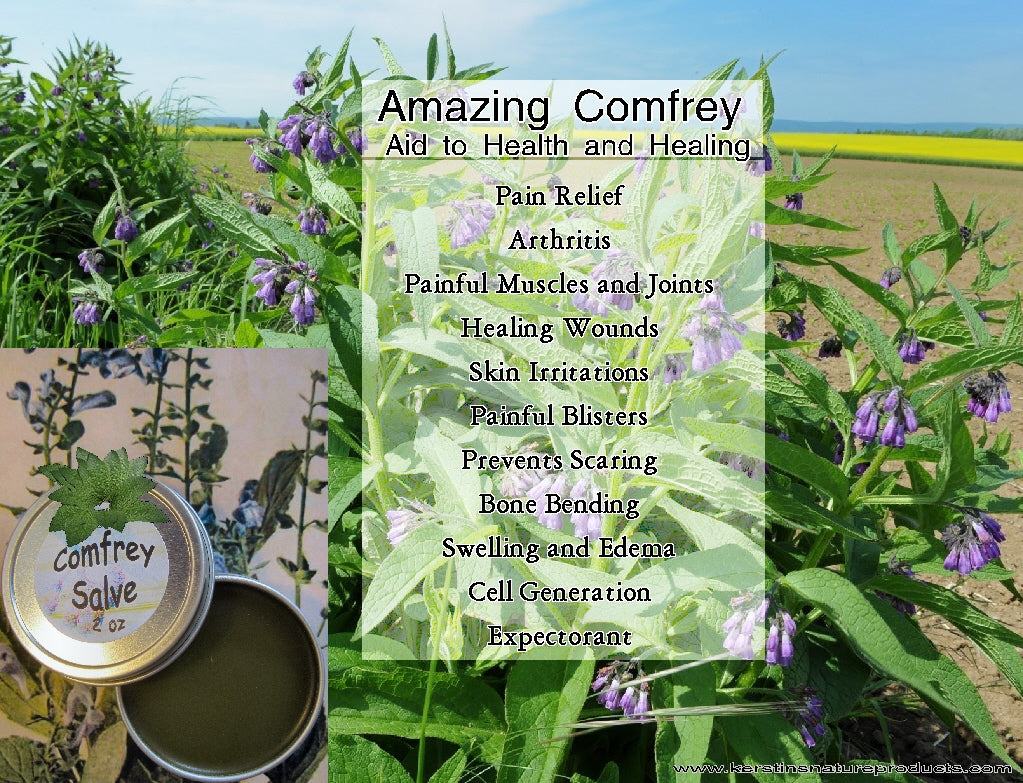 The Amazing Health Benefits of Comfrey
