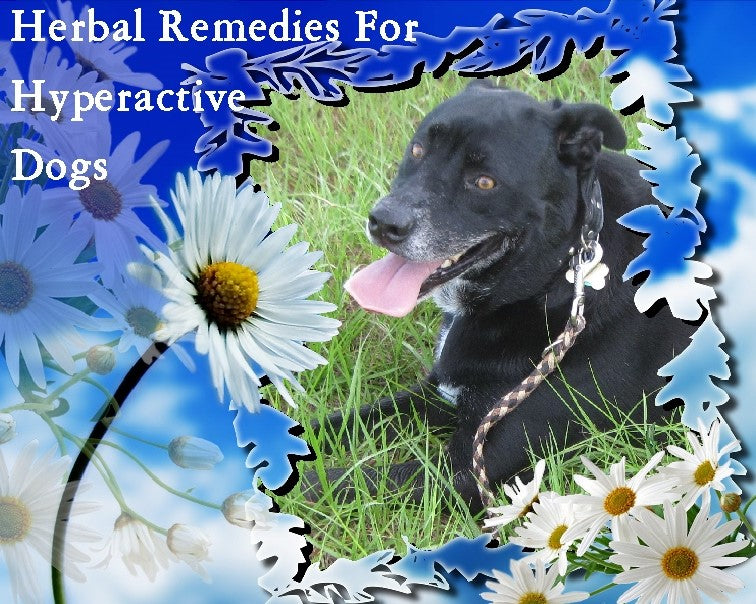 Herbal Remedies for Hyperactivity, Tension, Anxiety, etc. in Dogs