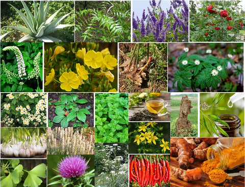 22 proven herb for common health conditions - Kerstin's Nature Products