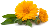 Calendula Flower - Kerstin's Nature Products