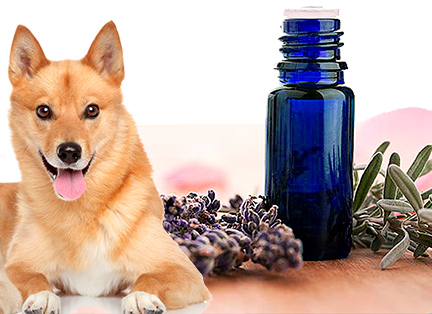 aromatherapy for dogs - kerstins nature products