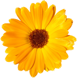 calendula - Kerstin's Nature Products