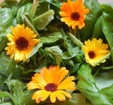Calendula Salad - Kerstin's Nature Products