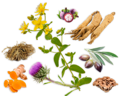 herbs - kerstins nature products