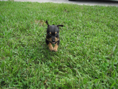 dog in grass - kerstin's nature products