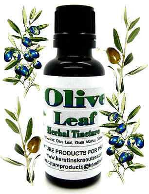 Olive Leaf Herbal Tincture ~ Multiple Sizes - Kerstin's Nature Products