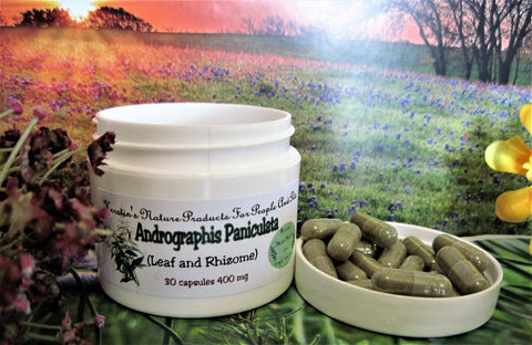 Andrographis Paniculata 400 mg 30 Capsules - Kerstin's Nature Products