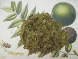 Black Walnut Leaf - Dried Herb Cut ~Multiple Sizes - Kerstin's Nature Products