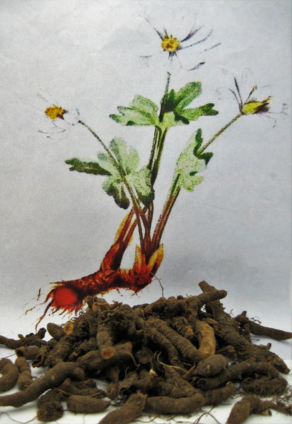Bloodroot Root Dried Herb Cut Kerstin S Nature Products