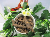 Bloodroot Dried Herb Cut Whole 2 oz - Kerstins Nature Products