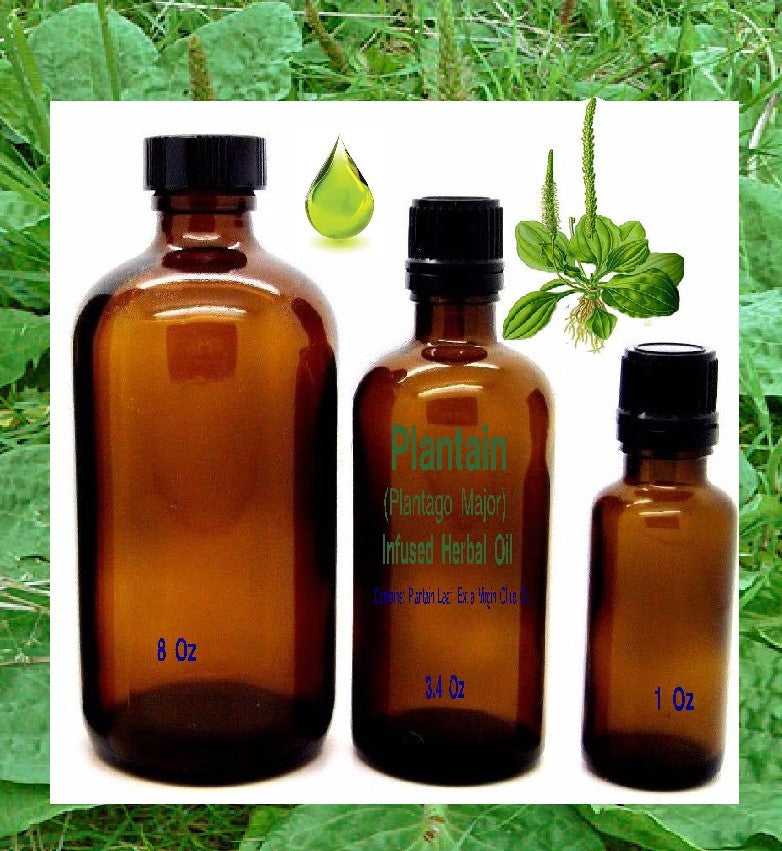 Plantain (Plantago Major) Infused Herbal Oil - Kerstin's Nature Products