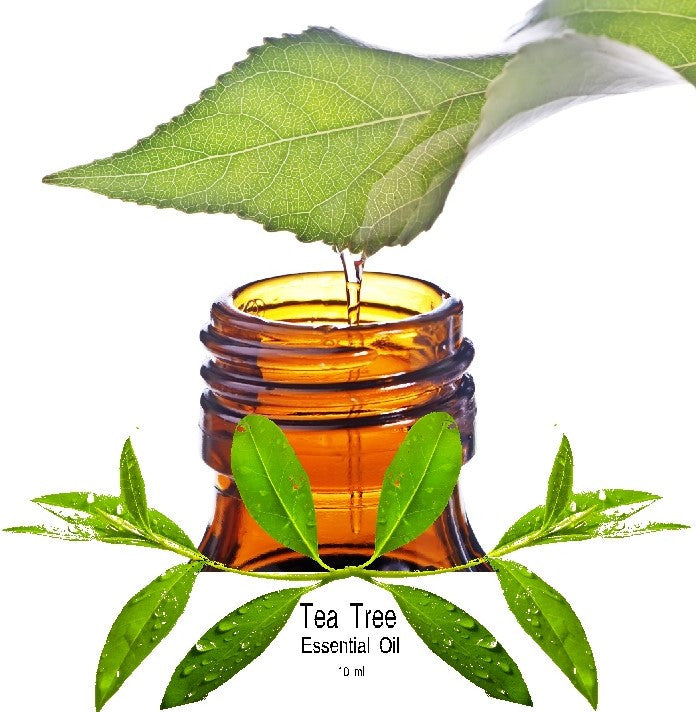 Tea Tree Essential Oil (Melaleuca Alternifolia) - Kerstin's Nature Products