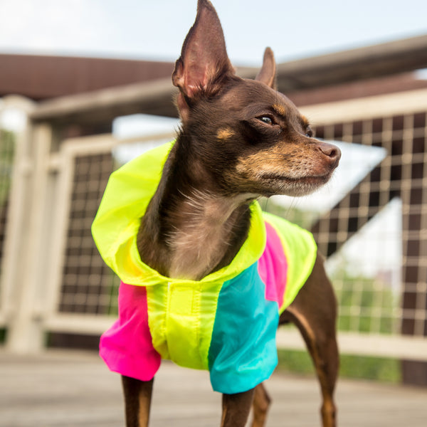 Neon UV-Protection Jacket For Small Dogs