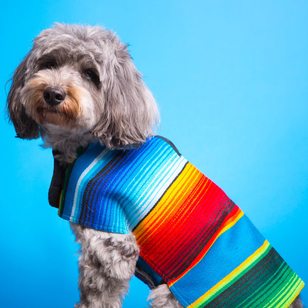Dog Poncho - Blue