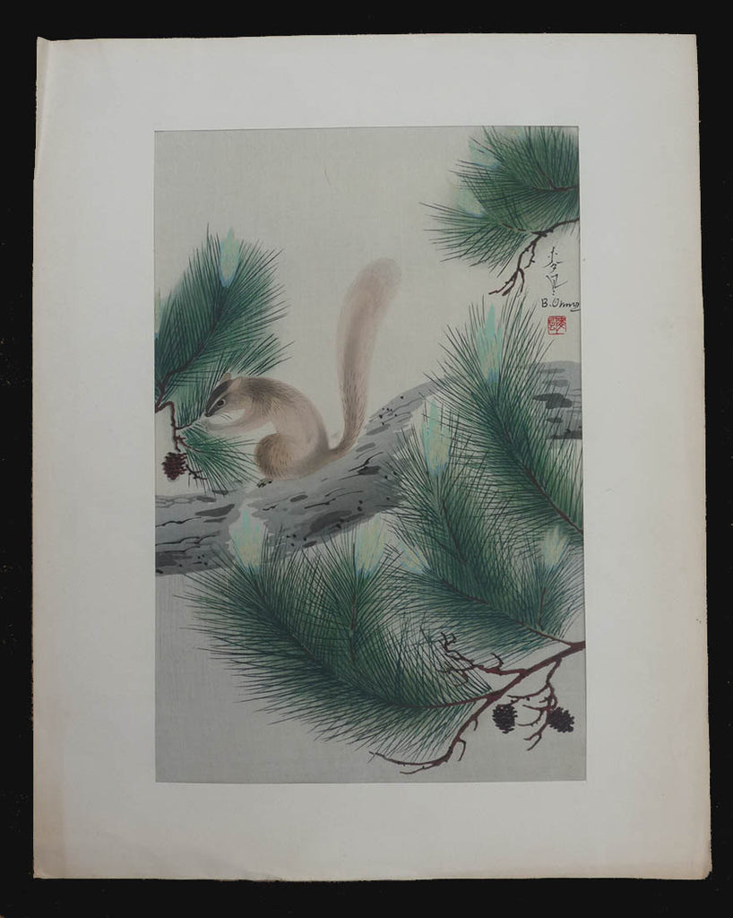 bakufu ono squirrel in pine tree