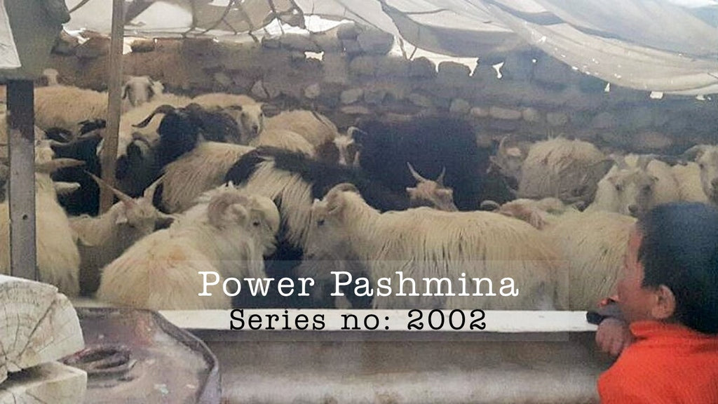 Trace back: Series no 2002 Power Pashminas