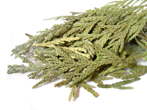 Cedar Leaf Tips, Ethically Wild-Harvested - CynCraft