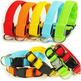 Light-up LED Dog Safety Collar FREE + SHIPPING Deal