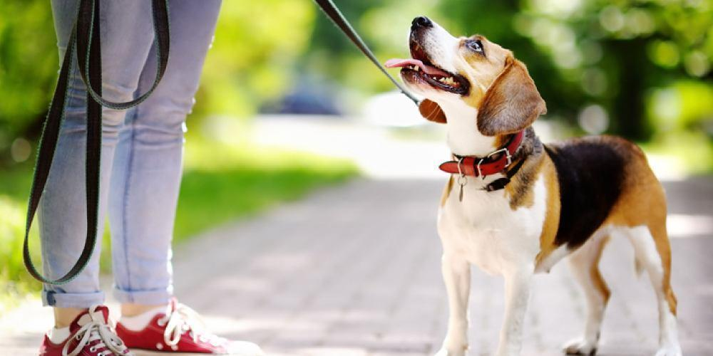 Puppy Obedience Training at Home | Steps for Training a Puppy ...