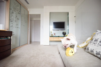 medication for separation anxiety in dogs online guide chapter 2 furbo dog camera. Black Bedroom Furniture Sets. Home Design Ideas