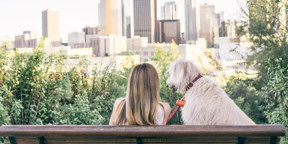 How to Leave Your Dog Alone While You're on Vacation | Furbo