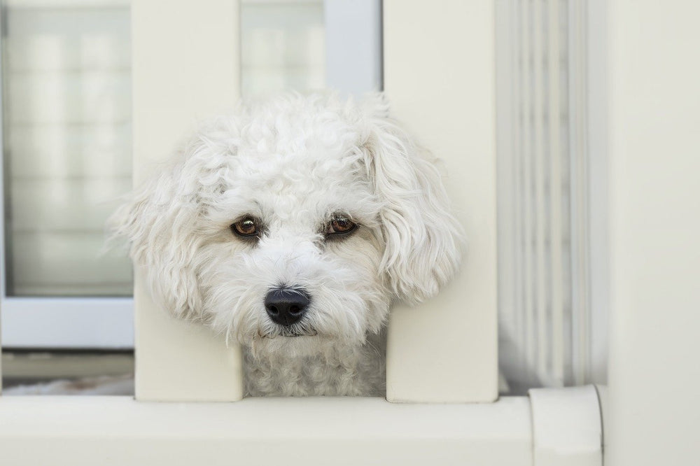 10 Dog Breeds With the Worst Separation Anxiety | Blog