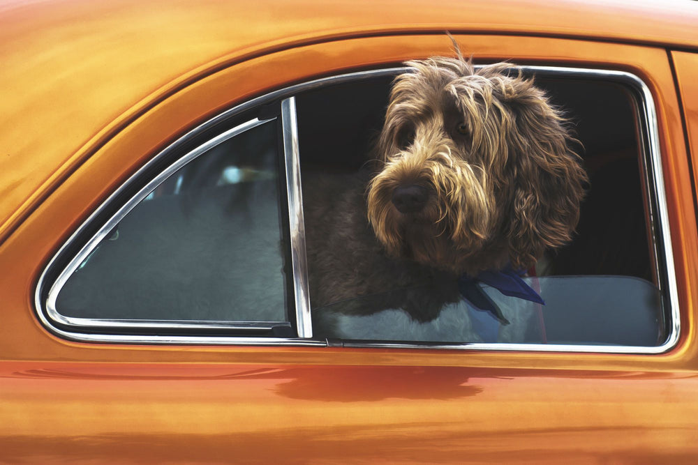 How Long Can You Leave Your Dog in the Car? | Furbo | Furbo Dog