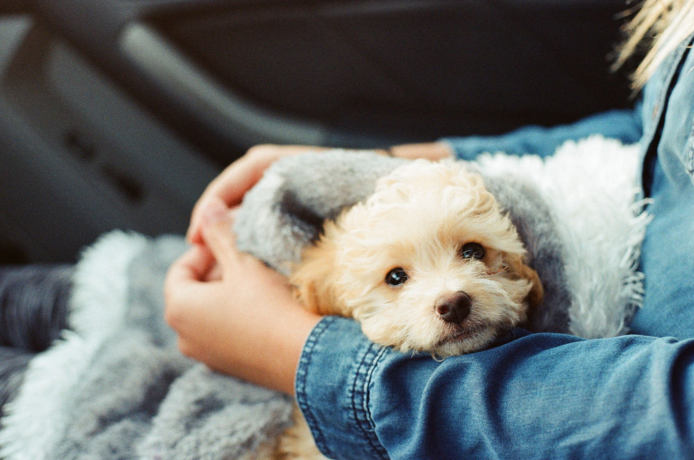 How To Deal With Puppy Separation Anxiety Blog Furbo Dog Camera