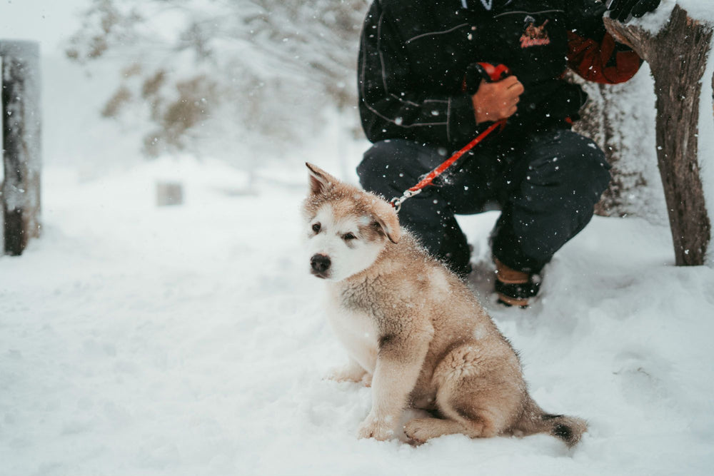 Winter Care for Dogs - Protect Your Pup From the Elements