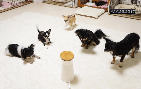 5 dogs standing around furbo