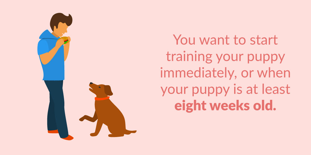 Puppy Obedience Training at Home | Steps for Training a