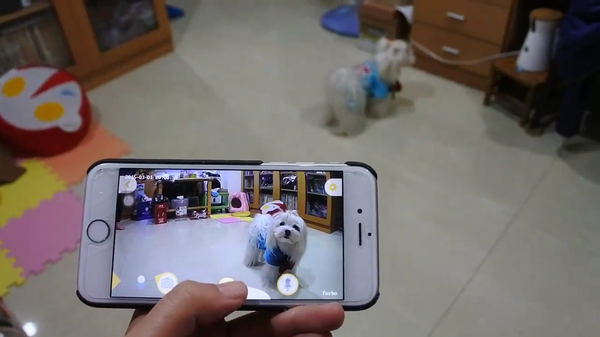 A person using Furbo to watch her furbaby on a phone screen monitor