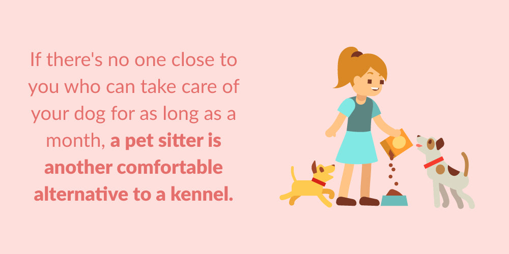 a pet sitter is a good alternative to a kennel
